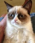 Team Grumpy Cat (Purple) logo