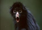 Spider Monkeys logo